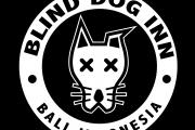 surf camp in bali blind dog inn